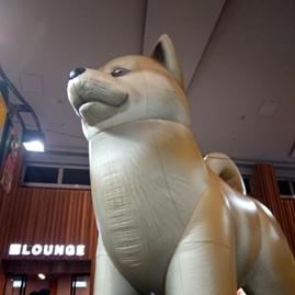 秋田犬が迎えてくれます