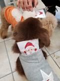 ニタサンタさんからクリスマスプレゼント